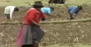 Trabajando por los campesinos